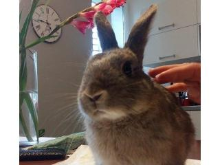 Bugs bunny u potrazi za domom