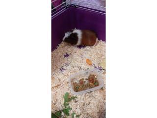 Đurđa traži novi dom